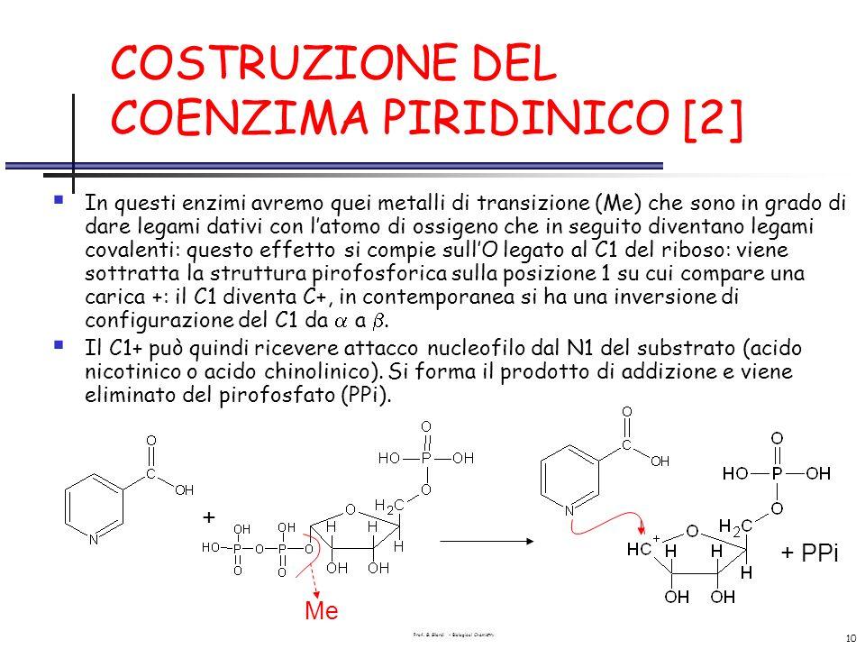 COSTRUZIONE DEL COENZIMA PIRIDINICO [2]